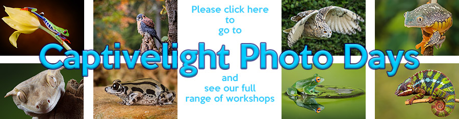 Click to go to the Captivelight Photography Workshops CoursesWebsite