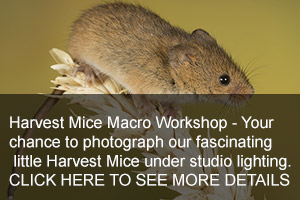 Harvest Mouse Photo Days