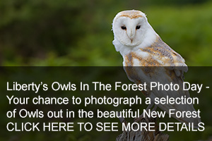 Owls In The Forest Photo Days