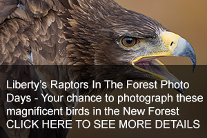 Raptors In The Forest Photo Days