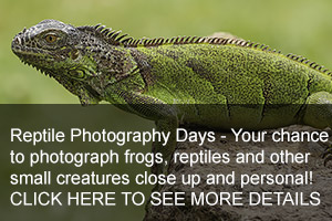 Reptiles Photo Days