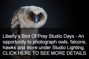 Bird Of Prey Studio